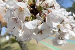 Frühjahrsimpressionen